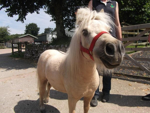 A small white pony