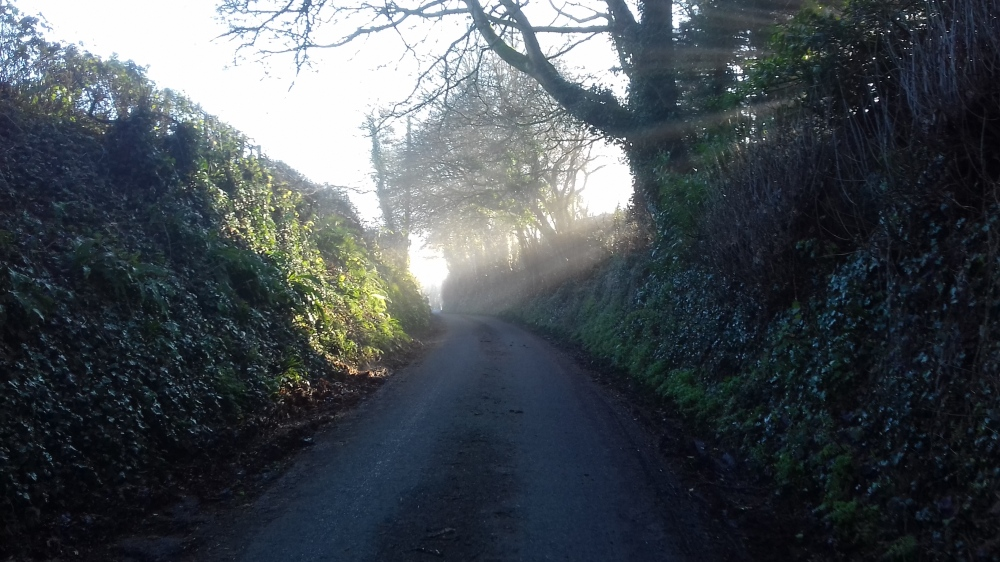 A country lane with trees and a beam of sunshine
