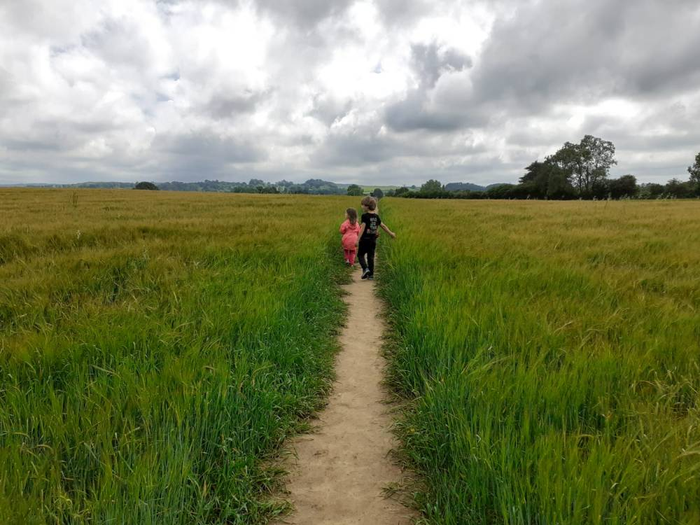 A wheat field with kids walking along the path through the middle