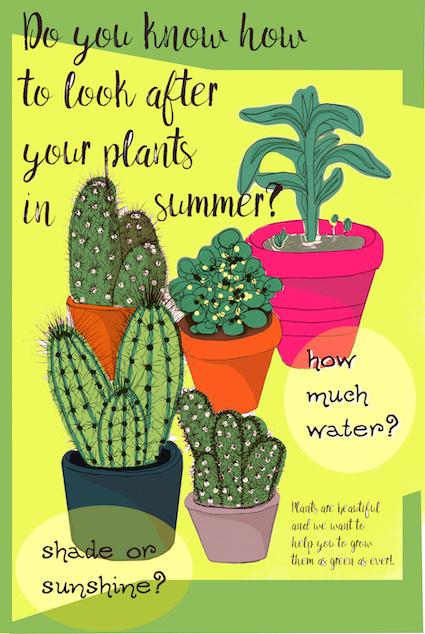 Five different cactus plants with vibrant colours