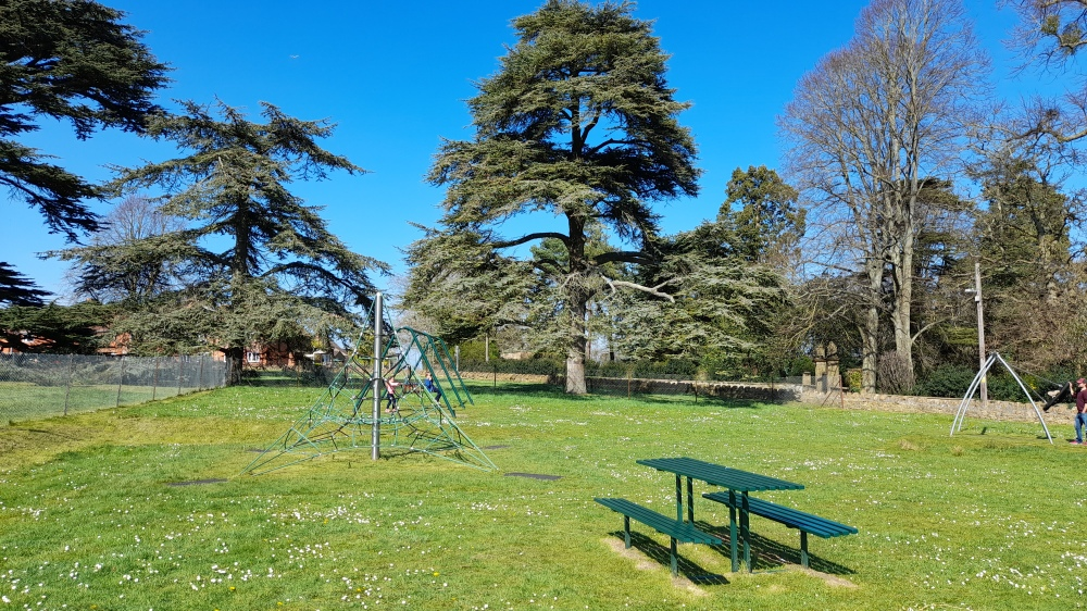 An avenue of ancient pine trees in the background with a grassy playpark with a green bench and rope climbing frame